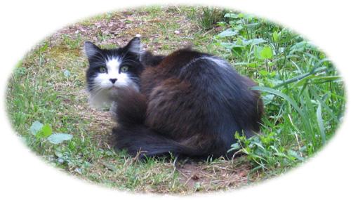 A cat called Jaydee.