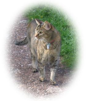 Cat: Emmy.